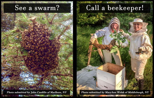 If you see a swarm, file a report on HoneyBees911.com!